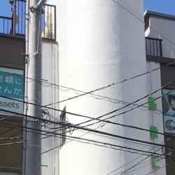 ウィンドウサイン・窓ガラス看板施工事例写真 神奈川県 他の階のどの店舗さんよりも目立っています